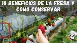 10 Beneficios de la Fresa y como Conservar